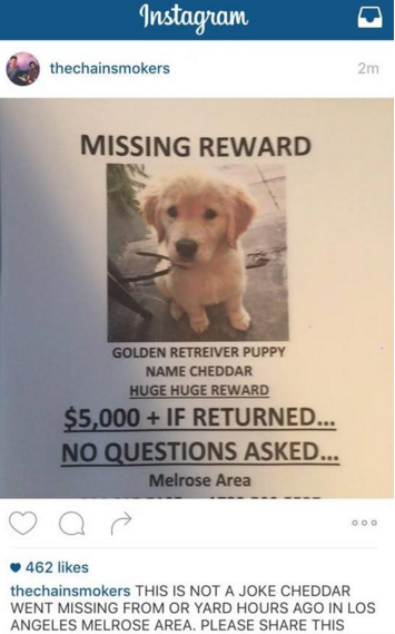 cheddar missing